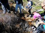 P1370287 El grupo del senderistas inicia a plantación de Manzanilla de Escombreras
