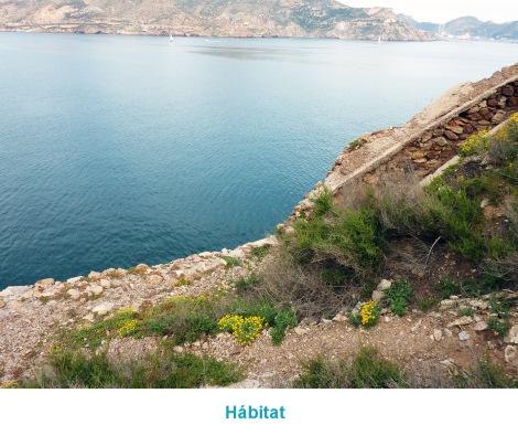 02.HABITAT_P1020934